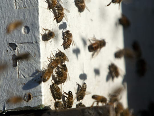 Bees that were involved in an accident on Interstate 15 near mile post 5 on Sunday, fly around their hives as they sit on a flat bed trailer at the Port of Entry on the Utah-Arizona state line Monday, Oct. 25, 2011. (AP Photo/The Spectrum,  Jud Burkett)