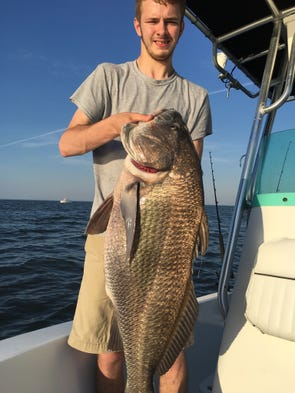 Mattt Garrison caught this 55 pound black drum at Coral