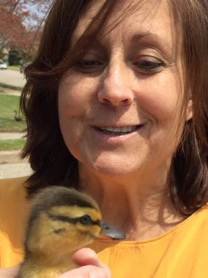 Photo of Toms River resident Megan Daugherty with one of 12 ducklings rescued from a storm sewer. Courtesy of Don Sweeney.