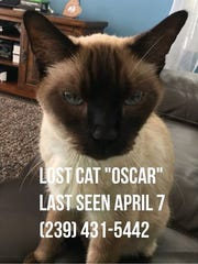 Oscar is missing from Saturnia Lakes on Immokalee Road.