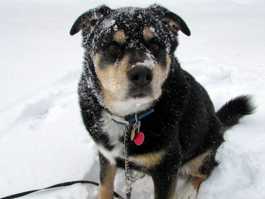 Susan Manzke's dog, Sunny, sure enjoys the snow even