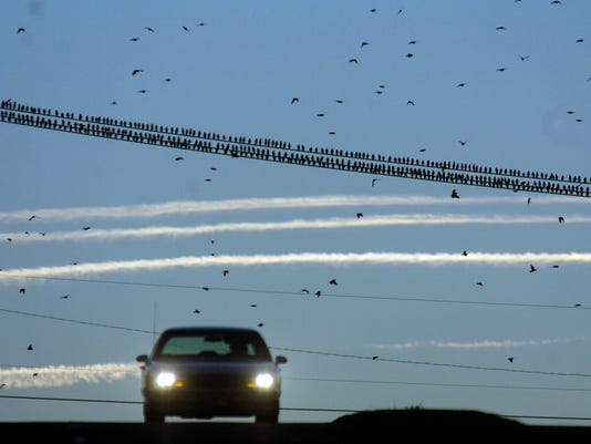 AP_Bird_Strikes