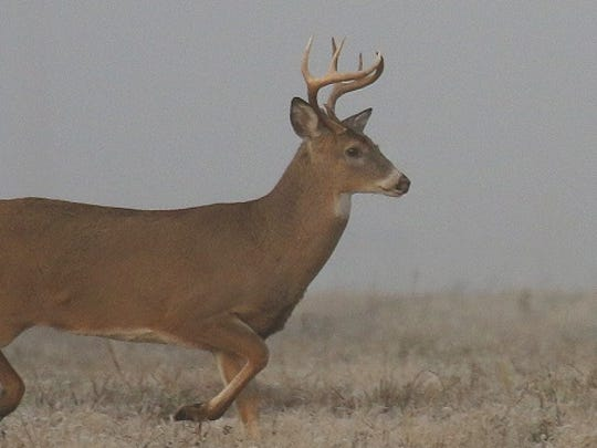 Antler restrictions will remain in place for 2016 if the proposed seasons are approved.