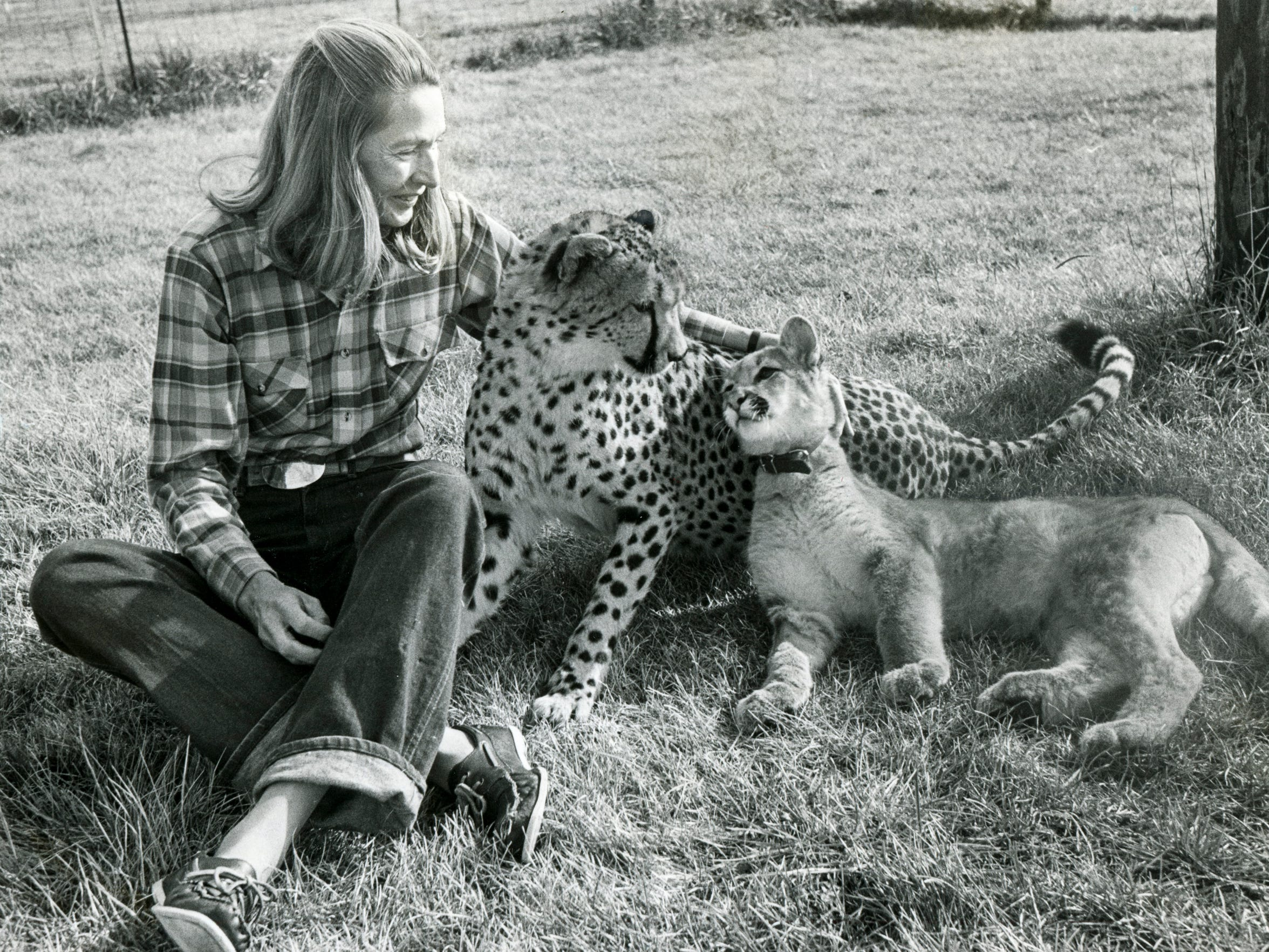 Cathryn Hilker looks after her 20-month-old cheetah, Angel, with the spots, and 6-month-old, Carrie Cougar Cat, Wednesday, December 1, 1982.