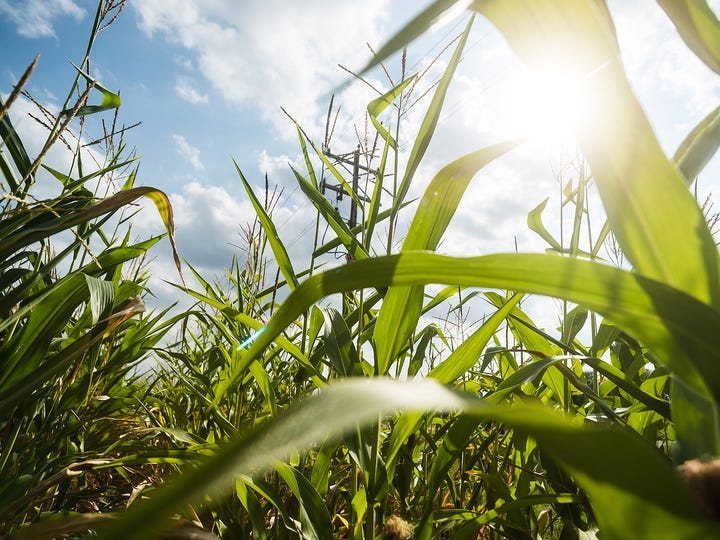The rise in corn prices has resulted in farms expanding tillable acreage, which also results in the use of more nitrogen fertilizer, a key source of nitrate contamination of groundwater.