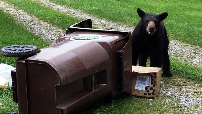 "The city of Asheville plans to start offering ""bear-proof"" trash cans to its customers later in 2020."