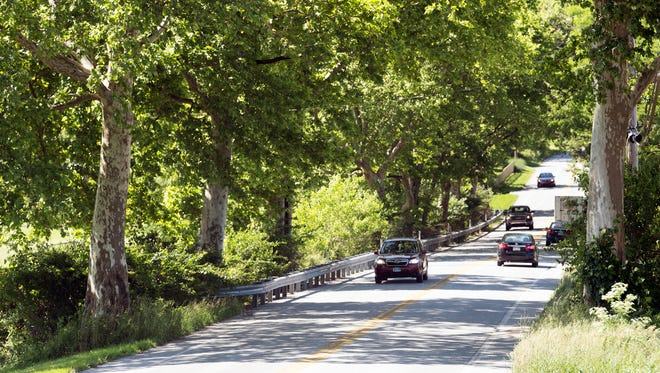 Sycamore trees line the Susquehanna Trail in southern York County. The War Mothers Club planted 400 of them about 100 years ago in memory of World War I veterans. More will be planted to replace those trees that have died.