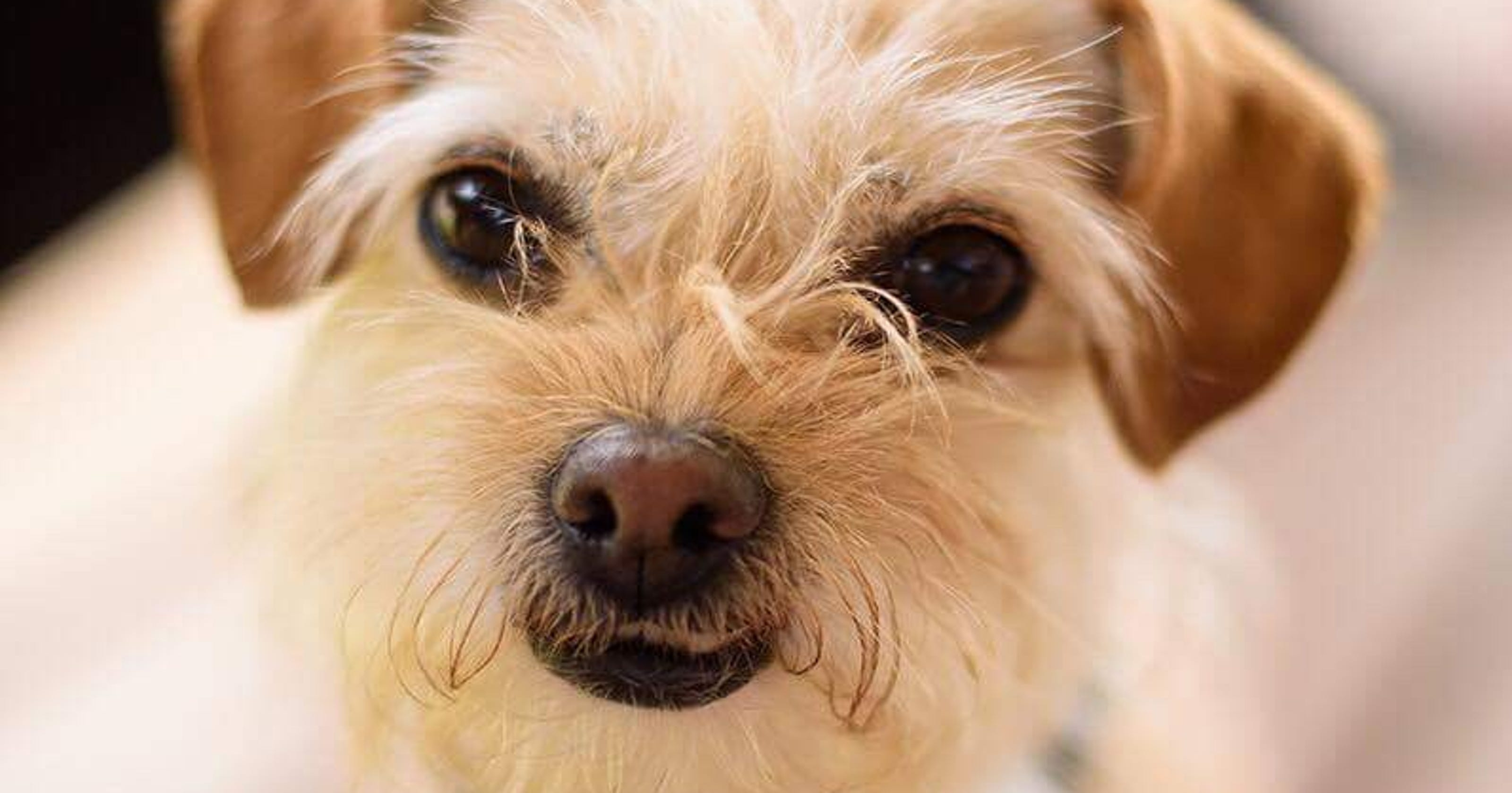 Cute dog from animal shelter plays Toto in \