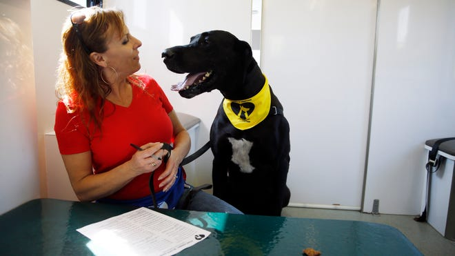 Paula Hackett, of Harleysville, Pa., talks with her dog Tosey, a 5-year-old Great Dane, inside the University of Pennsylvania veterinary school's animal bloodmobile in Harleysville.