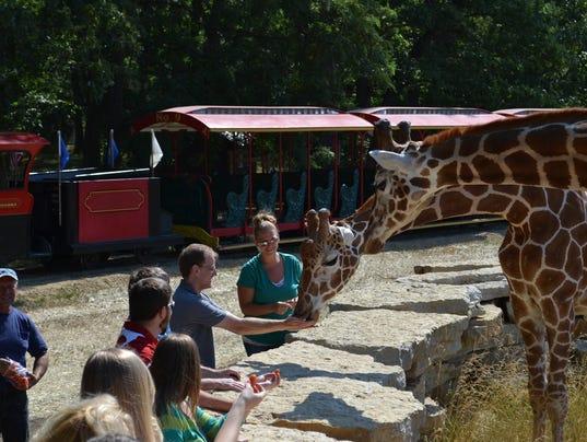 636052494534524358-Timbavati-Wildlife-Park.JPG