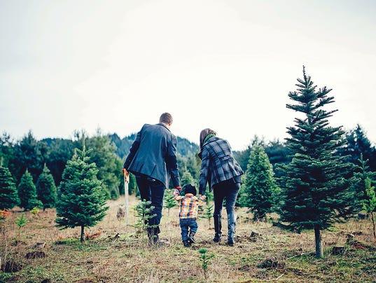 Christmas Tree Family at Tree Farm