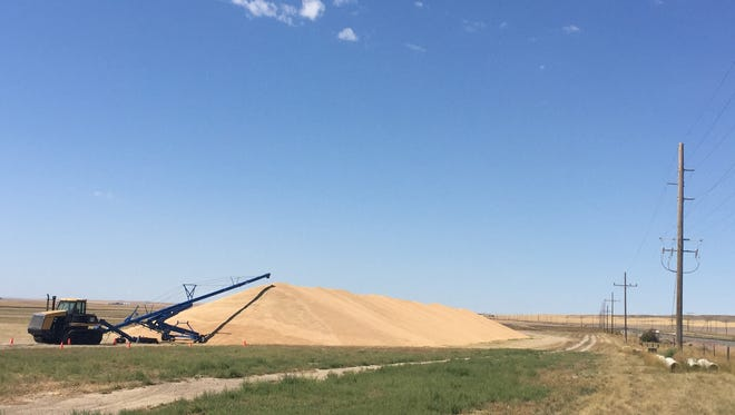 Grain piles up in Chouteau County