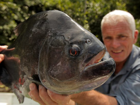 River Monsters pirahna