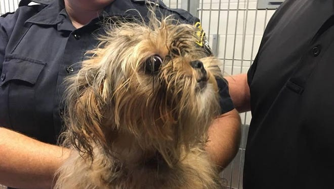 Someone left this little pup wrapped in a black plastic bag outside of the Woodhaven and Trenton Animal Shelter on Sunday.