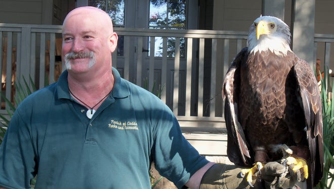 Walter Jacobs Park biologist Rusty Scarborough displays a bald eagle during Saturday's Red River National Wildlife Refuge celebration in south Bossier.