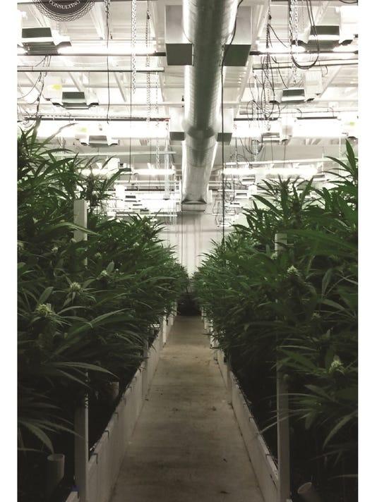 Growing room (Butler Evergreen).jpg
