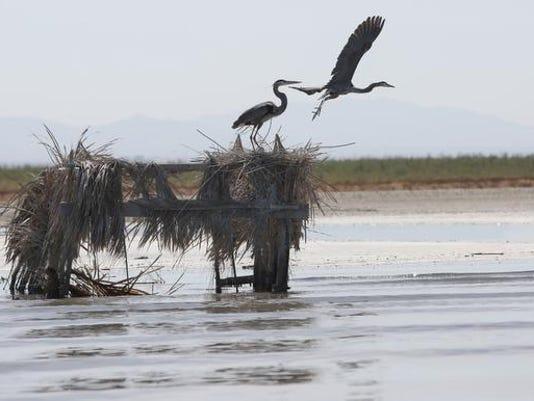 636324772894262732-salton-sea-birds-2.jpg