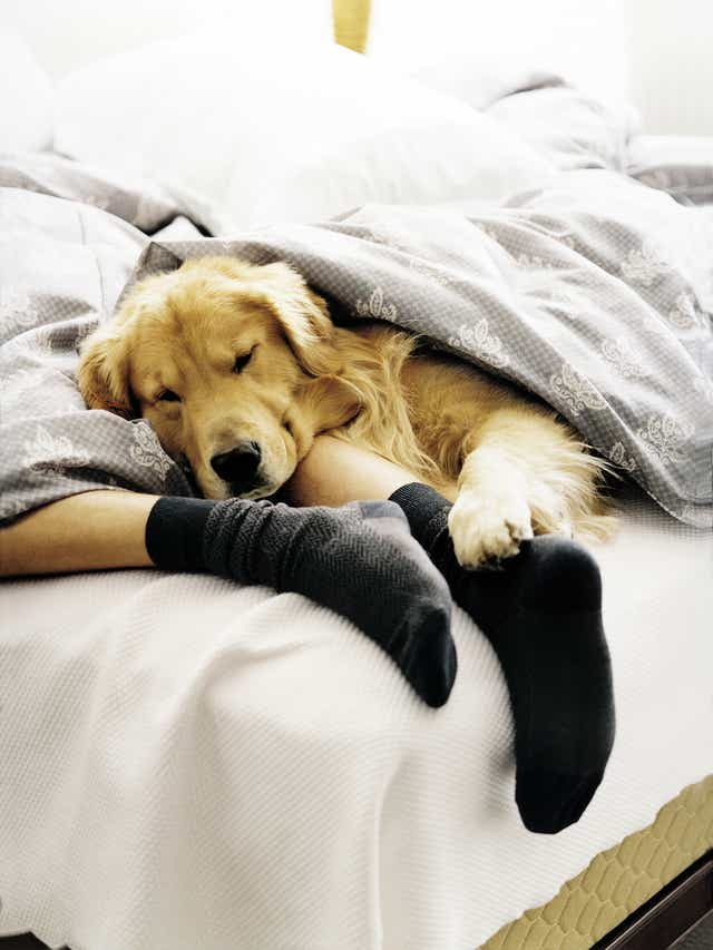 Have dog, will travel: Top pet-friendly hotel chains