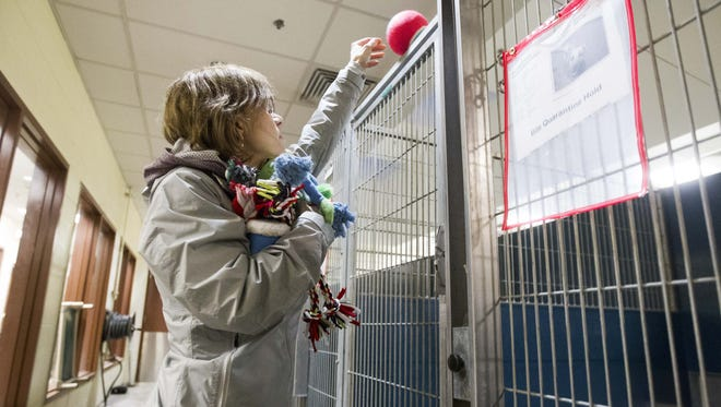 Kathleen Antahn, a volunteer, distributes toys to dogs at the Maricopa County Animal Care and Control Shelter in Phoenix on Dec. 24, 2016. Volunteers gave out cookies and toys to dogs at the shelter to spread holiday cheer on Christmas Eve.