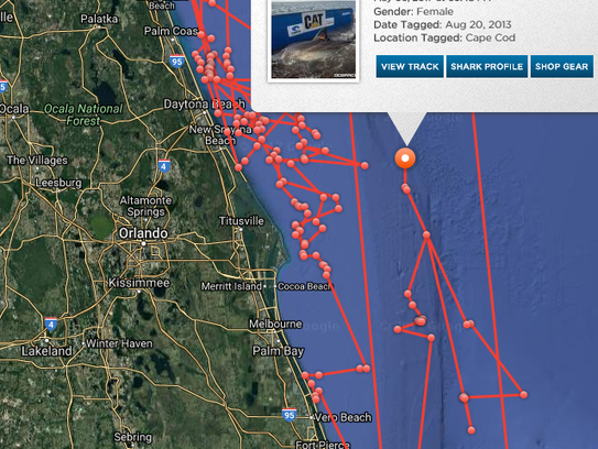 Katherine, a 14-foot great white shark, has spent years traversing Florida's waters.