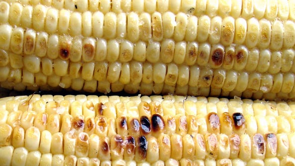 Roasted corn is a summer favorite, and at the center