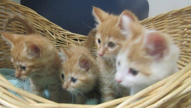 Kittens are the pets of the week.