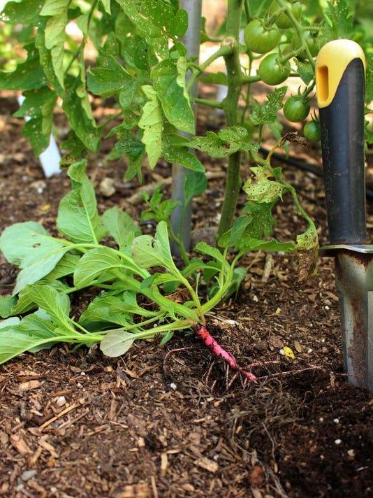 Gardening-Summer Spin_Robi.jpg