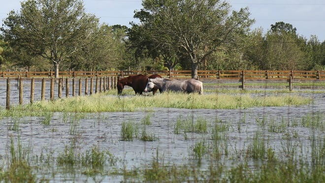 Heavy rains from Hurricane Irma left farms in rural St. Lucie County severely flooded Monday.
