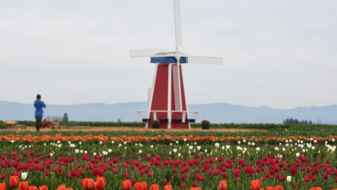 The Wooden Shoe Tulip Festival opens early on March 18 and runs through May 1.