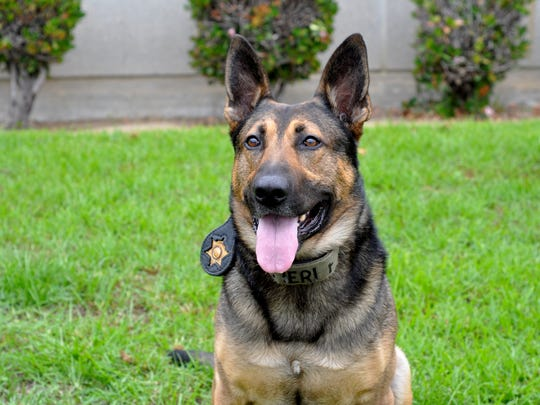 Argos is a K9 with the Monterey County Sheriff's Office.