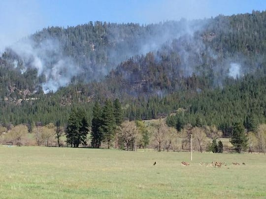 The Ward Fire burns Wednesday in the Plumas National Forest as a herd of deer graze nearby.