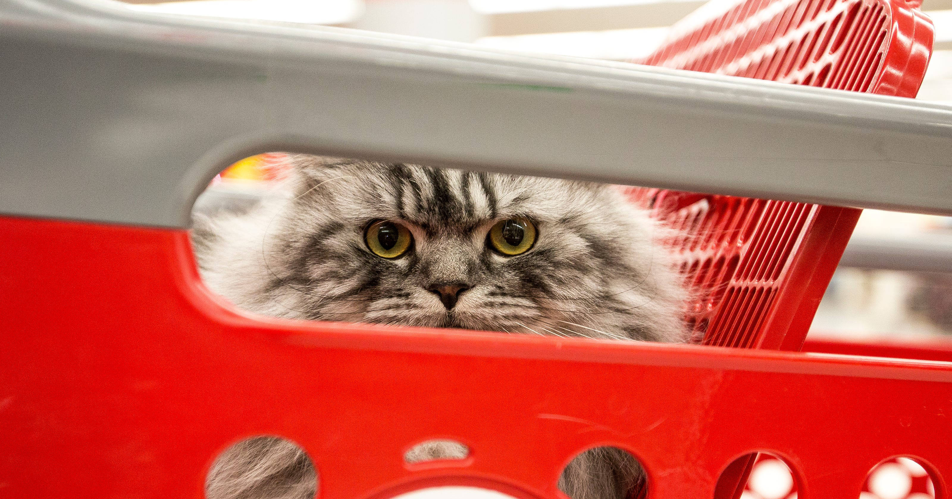Spencer cat featured in Target ad