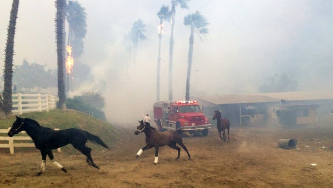 Terrified horses gallop from San Luis Rey Downs as the Lilac Fire sweeps through the horse-training facility, Thursday, Dec. 7, 2017 in San Diego.