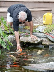 Howard Goodrich feeds his koi fish at his LaGrangeville