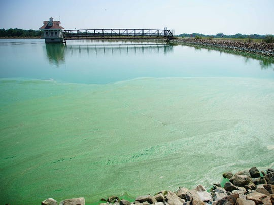 Newark Reservoir in 2017 was plagued with a blue-green algae bloom.