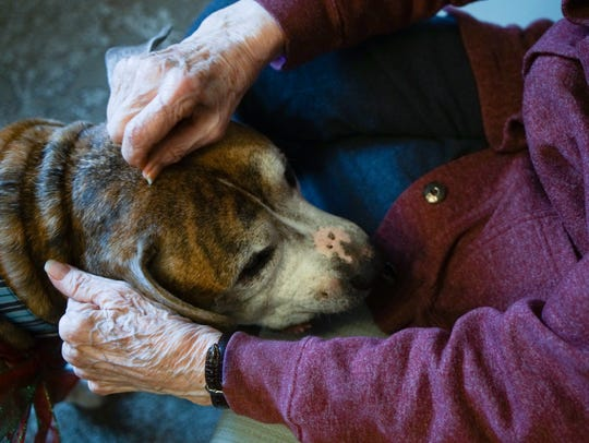 Rusty, an 8-year-old boxer, is embraced by Rockland