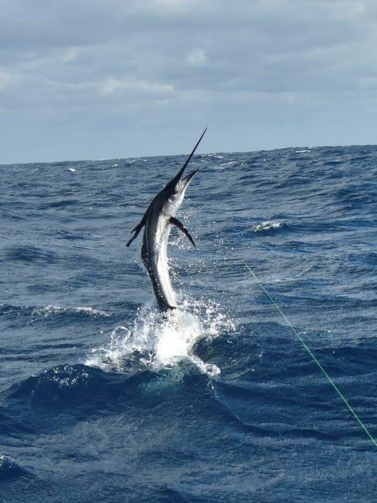 636489528566264722-sailfish-leonard-crop.jpg
