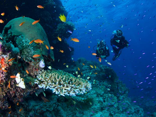Diving and snorkelling on the Great Barrier Reef