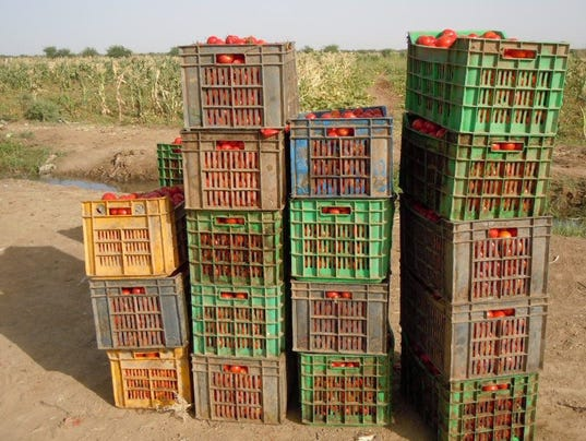 crates-of-tomatoes.jpg