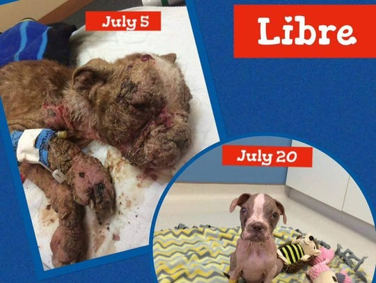 Speranza Animal Rescue posted this beofre-and-after