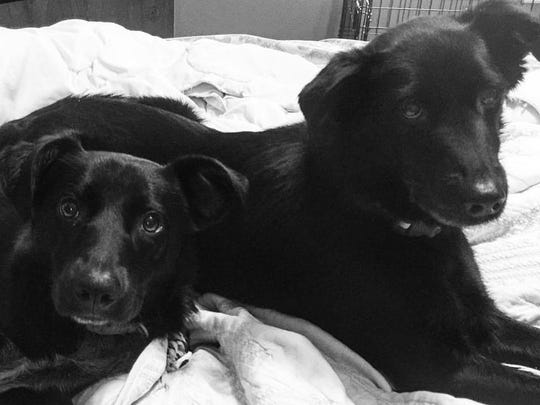 Max and Molly are two black lab mixes that belong to CJ producer Taylor Riley.