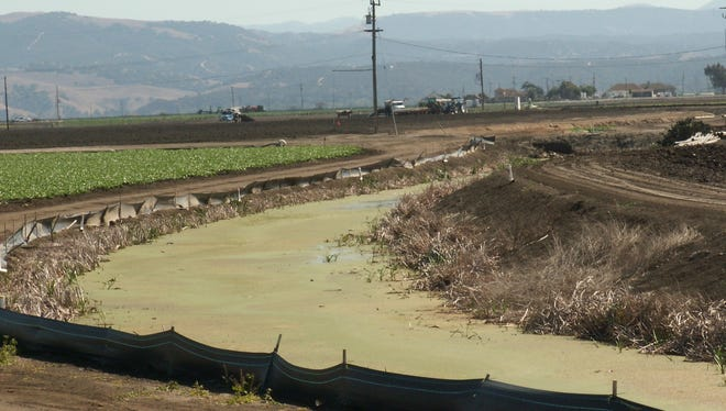 Tembladero Slough in Salinas Valley is polluted by both fertilizers and pesticides.  It feeds into the Elkhorn Slough, which is home to nearly 200 sea otters, an endangered species.