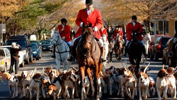 The Middleburg Hunt Review takes to the streets creating the spectacular sight of 150 horses with riders and their foxhounds.