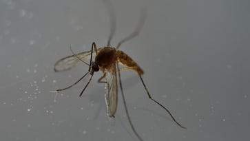 The CDC and the surgeon general have reiterated warnings to travelers of Rio about the mosquito-borne Zika virus.
