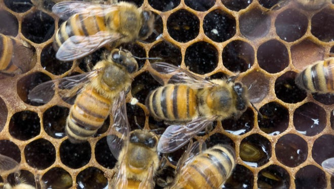 Honey Bees that produce raw Wildflower honey work in their hive at a outdoor Farmer's Market in Washington, DC.