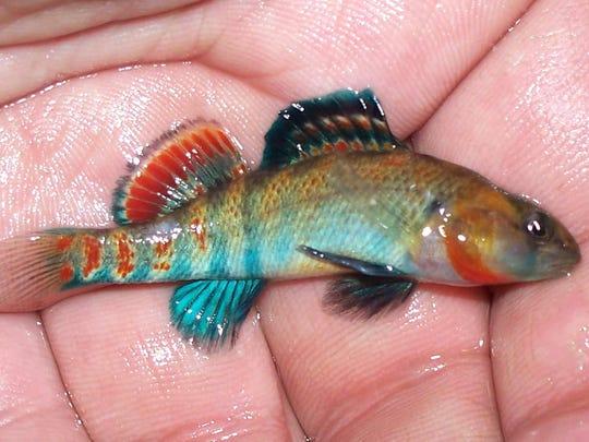 You won't believe these Missouri fish swim beneath your canoe