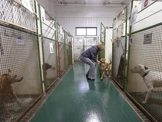 Volunteer Deb Josephs works in the kennel at Chances