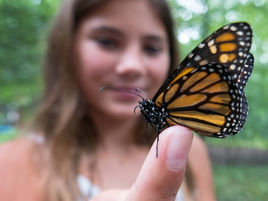 A girl gently displays a monarch butterfly at the Tenafly
