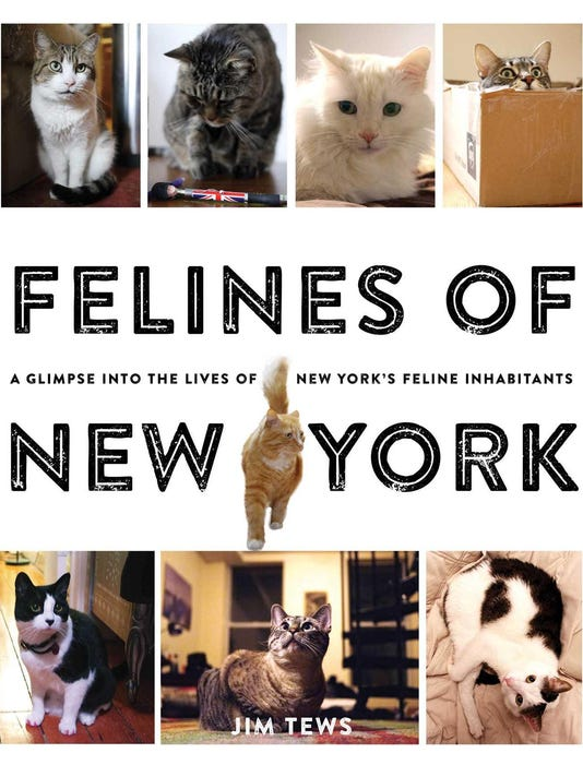 felines-of-new-york-9781501125836_hr