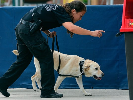 Deputy Alicia Angstadt of the Berks County Sheriff's Department and her K-9 partner Roxy take part in monthly training, Monday July 27, 2015. The K-9 officers searched for explosives and drugs at Santander Stadium, but Roxy is unique in that the 4 year old Labrador is trained to detect cellular phones.  John A. Pavoncello - jpavoncello@yorkdispatch.com